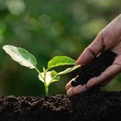 Cultivating Abundance